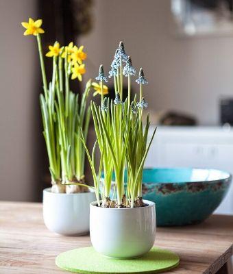 garden indoors Feature