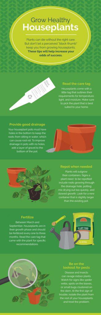 grow-healthy-houseplants