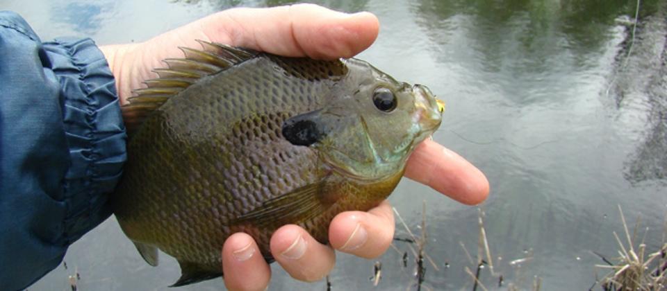 3 Basic Fly Fishing Tips TakeMeFishing