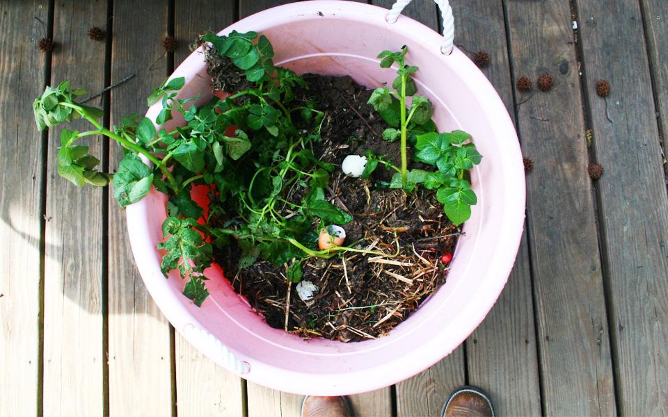 Compost in Bucket