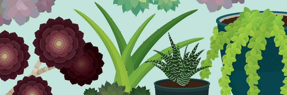 a-guide-to-succulents-header gardening plants