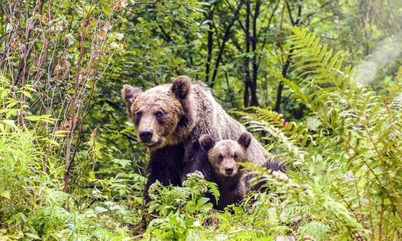 Bear Safety: How To Be Safe Around Bears