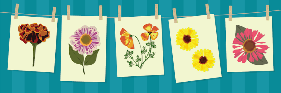 crafting-with-dry-flowers-header