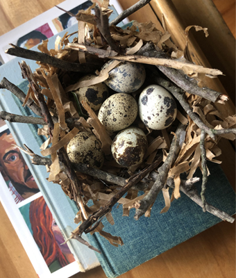 Bird Nests for Quail Eggs Feature