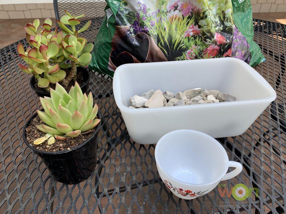 DIY succulent project materials