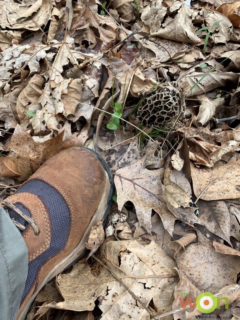 windrose boot hiking with mushroom