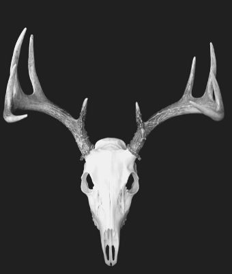 European Deer Mount feature