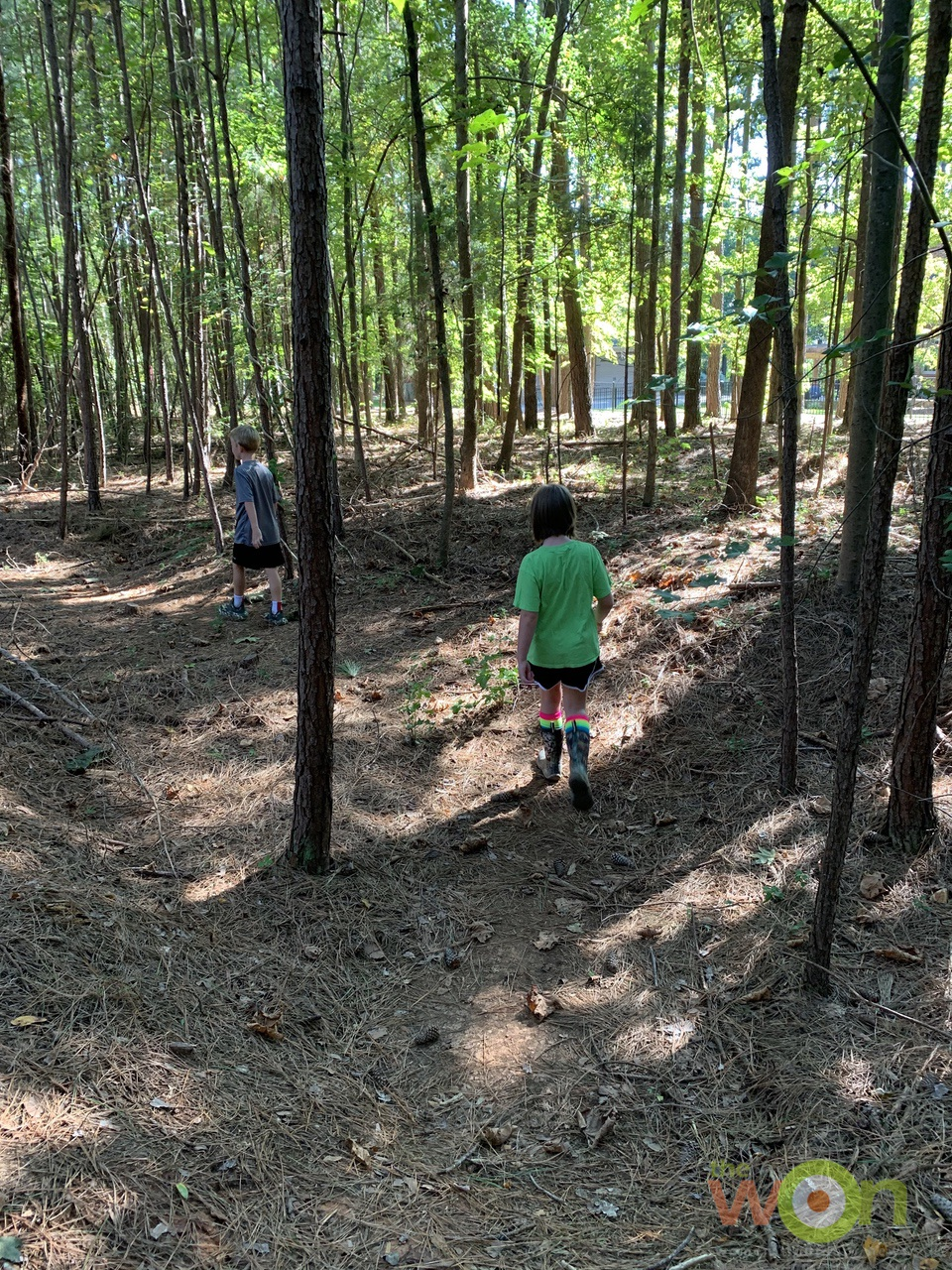 kids on pinecone hunt