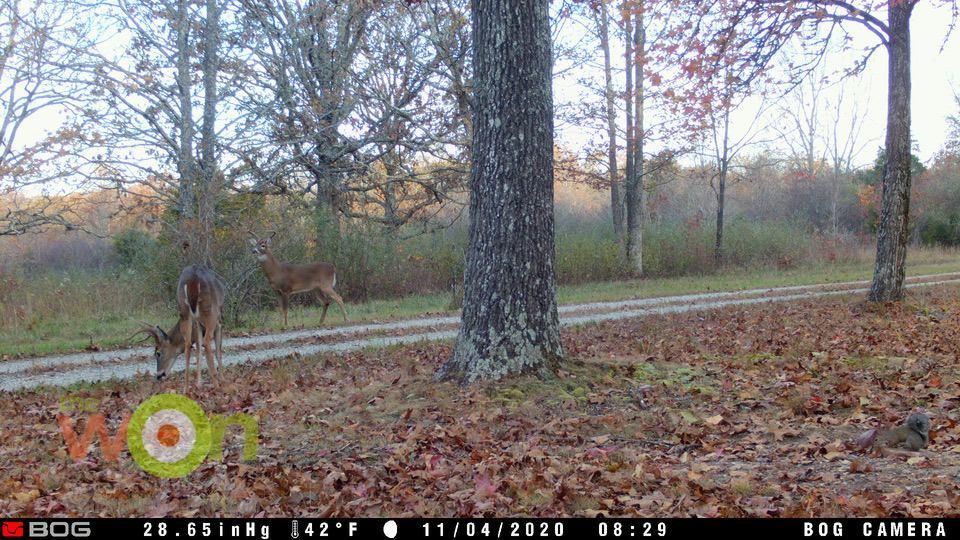 Bloodmoon buck