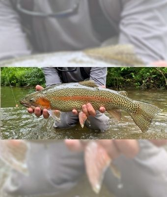 fishing line feature