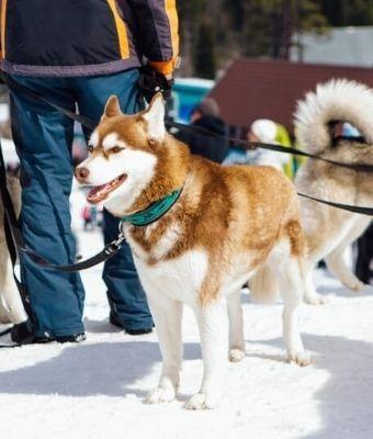 Pet friendly ski resorts feature