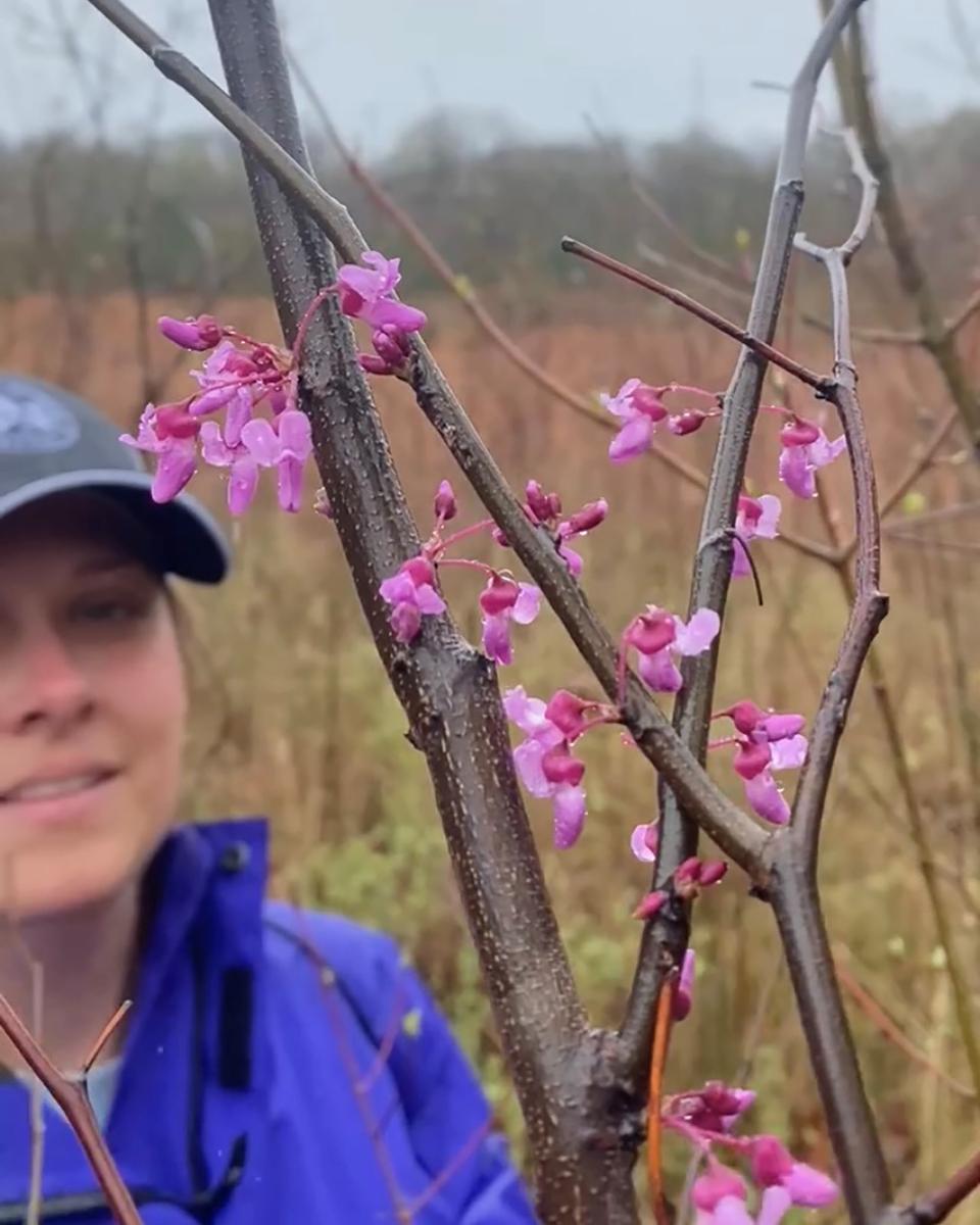 Jessica White Redbud Tree