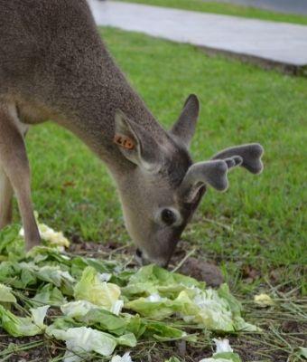 deer garden feature-2
