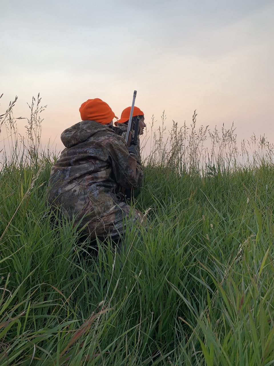 Stalking deer in the tall grass