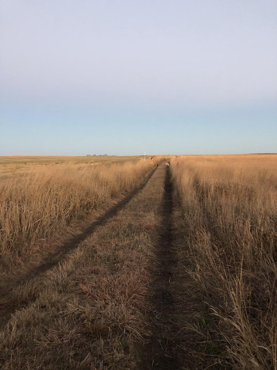 Upland field
