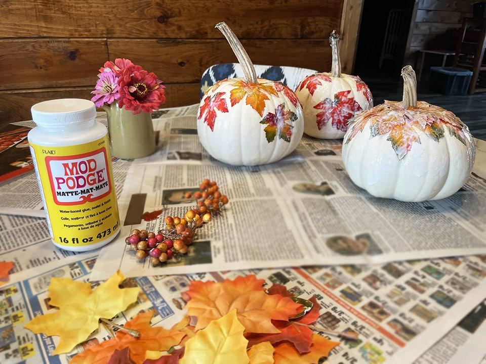 Pumpkins Drying